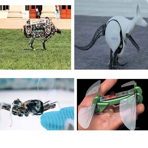 top8 robo animals ictnic